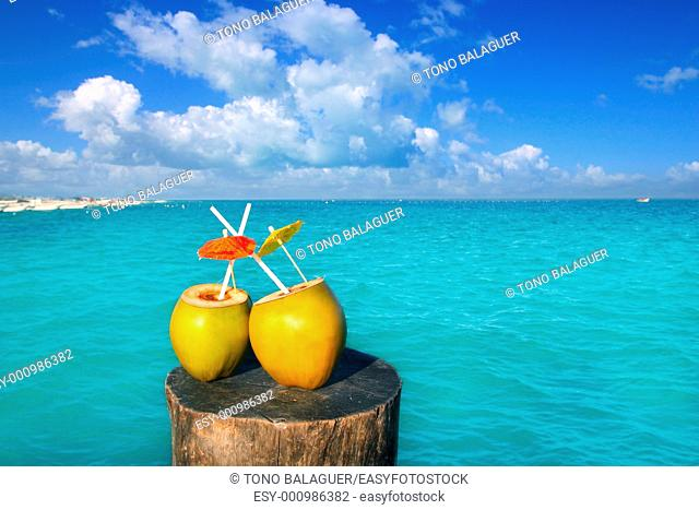 fresh two coconuts juice cocktail water straws in caribbean sea trunk