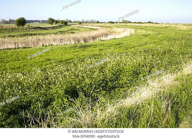 Landscape of lowland drained marshland, Oxley Marshes, Hollesley, Suffolk, England, UK