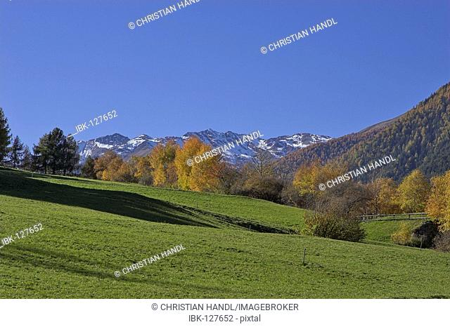 Autumn colored landscape on the Prader hill, Vinschgau, South Tyrol, Italy