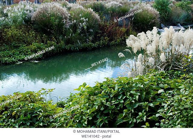 Riverside bush