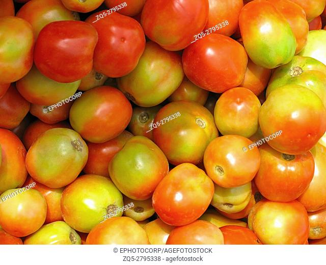Tomatoes - Most common Vegetable. Solanaceae Nightshade