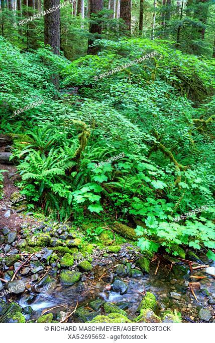 Rain Forest, Olympic National Park, UNESCO World Heritage Site, Washington State, USA