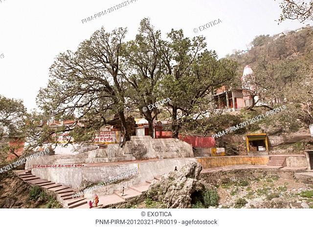 Trees near a temple, Jammu And Kashmir, India