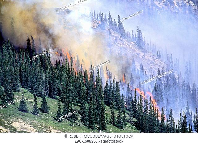 This image is of a controled forest fire burn in Jasper National Park in Alberta, Canada