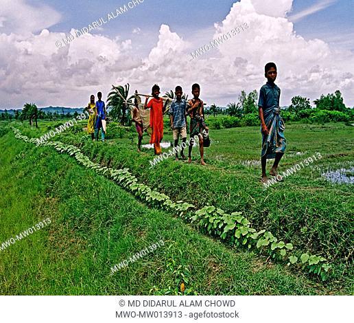 Children walk on the ridge of fields at a village in Chittagong, Bangladesh December 11, 2006