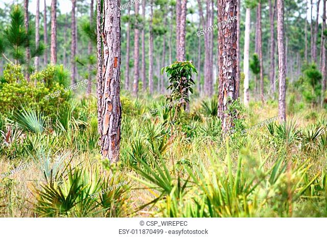 Forest Scene - Everglades