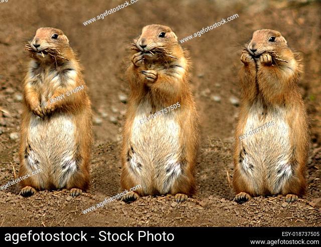 die drei Mampfer