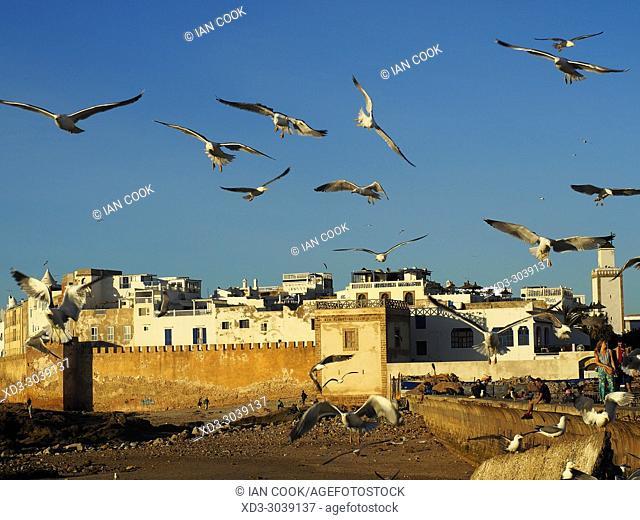 medina viewed from fishing port and gulls in flight, Essaouira, Morocco