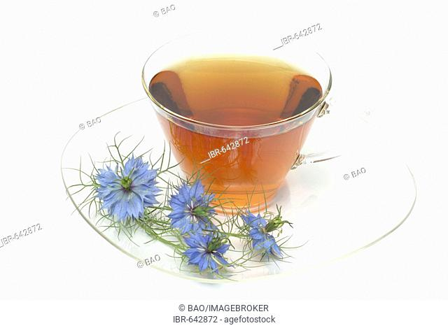 Fennel Flower or Black Caraway (Nigella sativa) herbal tea, medicinal tea
