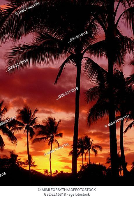 sunset with palms, Hawai'i