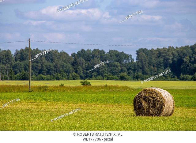 Hay bale lying on the green meadow, on forest and blue sky background. Hay bales on the field after harvest in morning. Freshly rolled hay bales on field in...