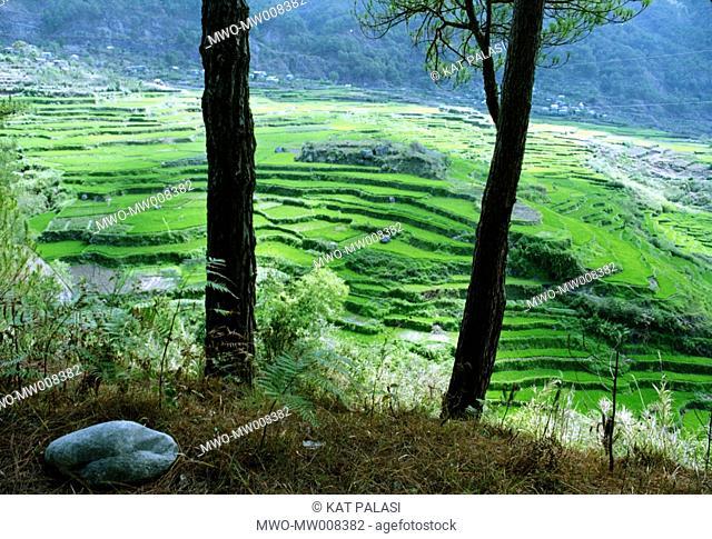Sagada rice terraces, Mt Province, Philippines 2003