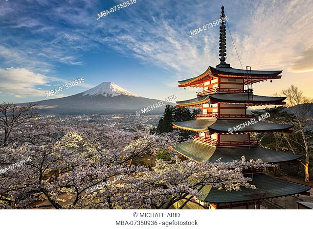 Mount Fuji with a red pagoda in spring season with cherry blossoms, Japan