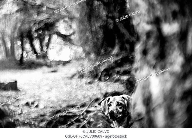 Dog Sitting under Blurred Tree