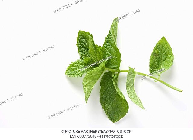 Green Leaves Of Mentha Suaveolens On White Background