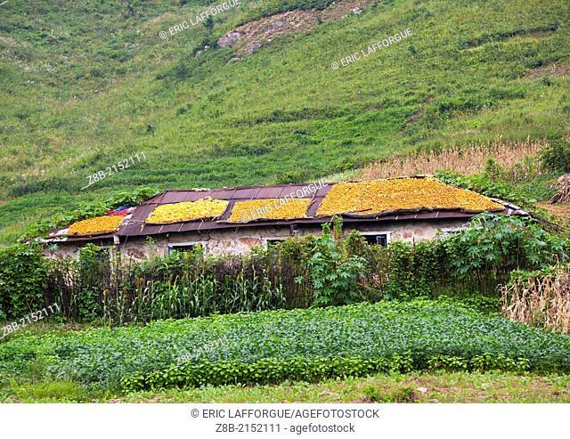 Drying Corn On Roofs, Kaesong, North Korea