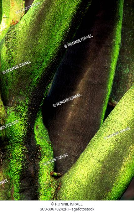 Greens and yellows Hampstead Heath, London, UK