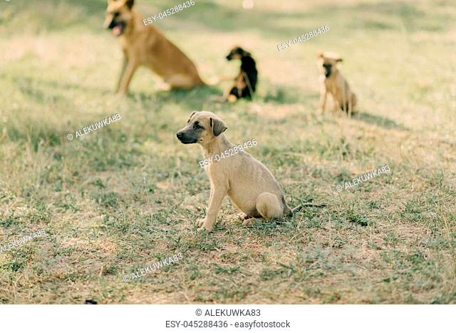 a flock of dogs on the lawn