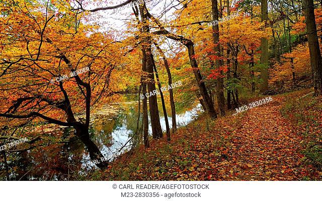 A leaf-strewn path follows a stream in a colorful autumn scene, Pennsylvania, USA