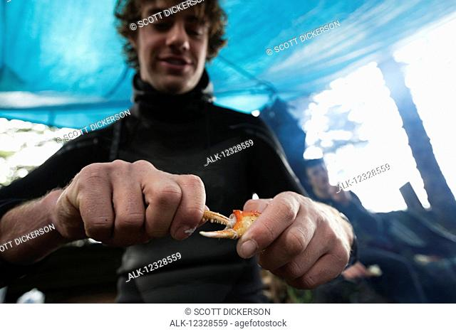 Man eating crab under a tent, Southeast Alaska; Yakutat, Alaska, United States of America