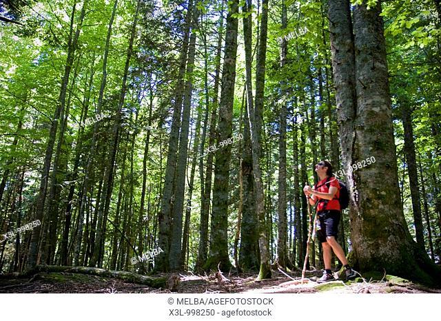 Trekking in Lizardoia  Irati forest  Navarra  Spain