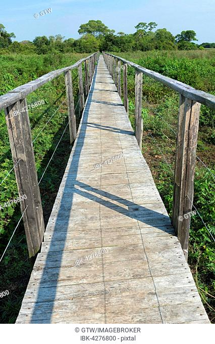 Wooden walkway, Pantanal, Mato Grosso, Brazil