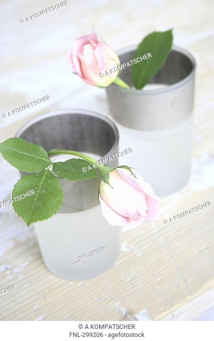 Close-up of two roses in vases