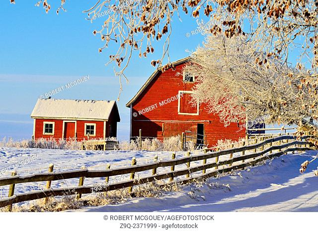 A red wooden barn and shed standing on the top of a hill covered with snow and frost on a farm in rural Alberta