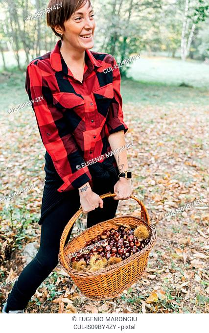 Woman collecting chestnuts, Rezzago, Lombardy, Italy