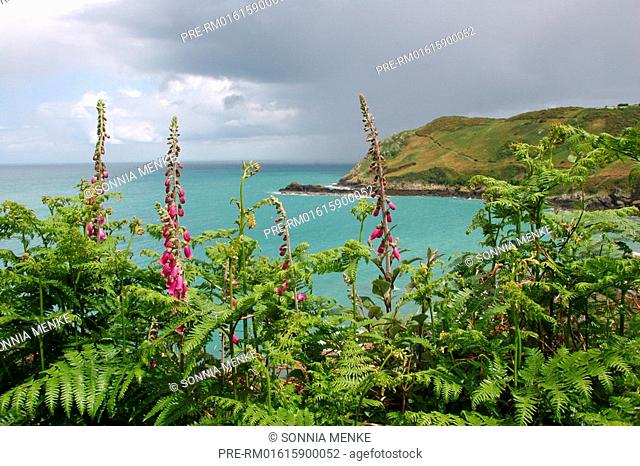 Cliff Path, north coast, Jersey, channel island, channel islands, Great Britain, Europe