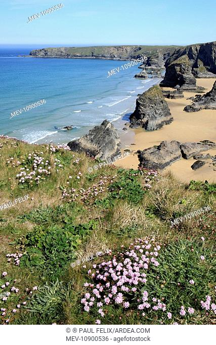 Bedruthan Steps Coastline and Beach. with Thrift / Sea Pink in foreground - near St Eval, North Coast of Cornwall, UK