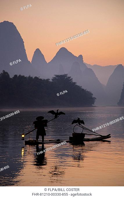Traditional fisherman with trained cormorants standing on bamboo raft at sunrise, on river in karst area, Li River, Guilin, Guangxi Zhuang Autonomous Region