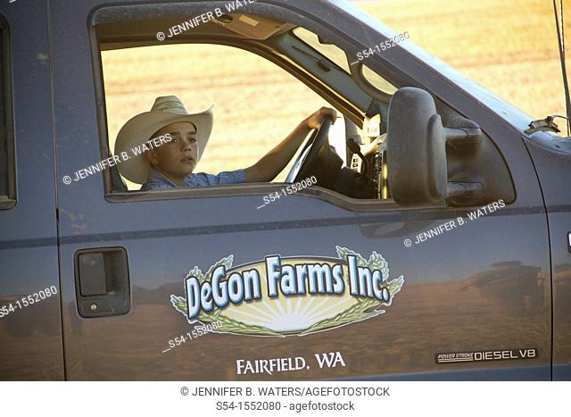 A boy drives the family truck after they finish the harvest of their pea field in Fairfield, Washington, USA