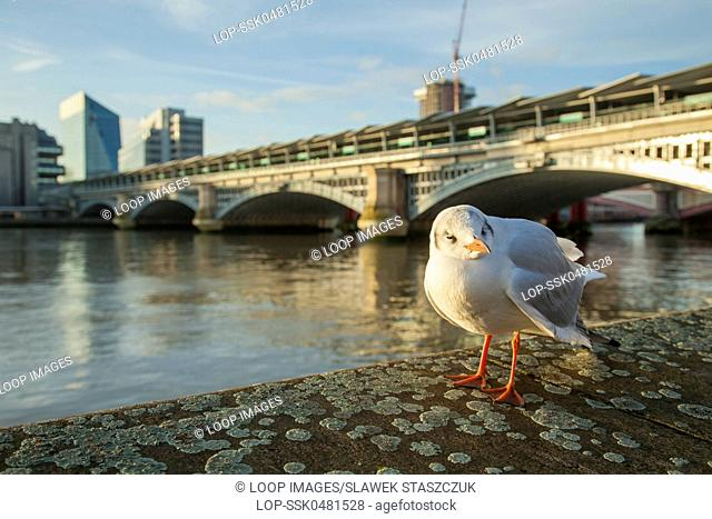 Seagull at Blackfriars Bridge