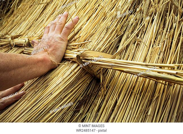 Close up of a man thatching a roof, fastening a bundle of straw with a hazel wood peg