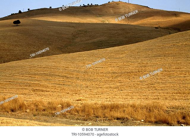 Golden Fields Central Sicily Italy