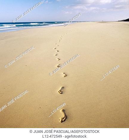 Corralejo beach, Fuerteventura. Canary Islands, Spain