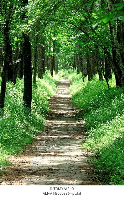 Road and trees, Tochigi Prefecture