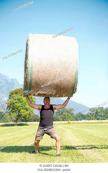 Mature male farmworker lifting heavy bale of hay in field