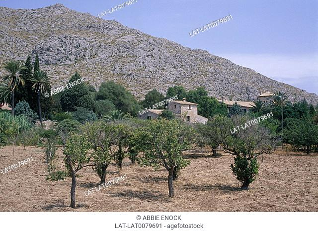 Majorca. Balearic. Farm building/ house. Round tower. Variety of trees. Small/ large. Hillside