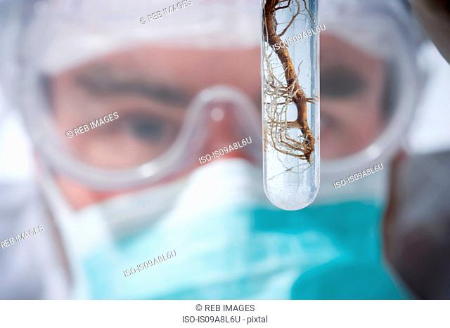Scientist holding test tube with roots, close up