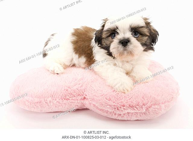 A puppy laying on a pillow