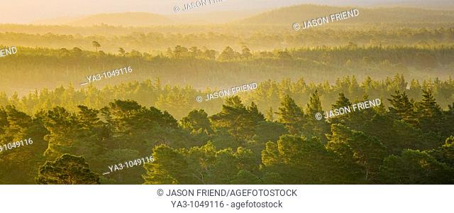 Scotland, Scottish Highlands, Cairngorms National Park  Mist rising at dawn over the Caledonian Forest of the Rothiemurchus estate