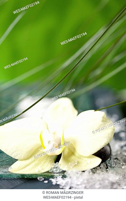 Orchid and bath salt, close-up