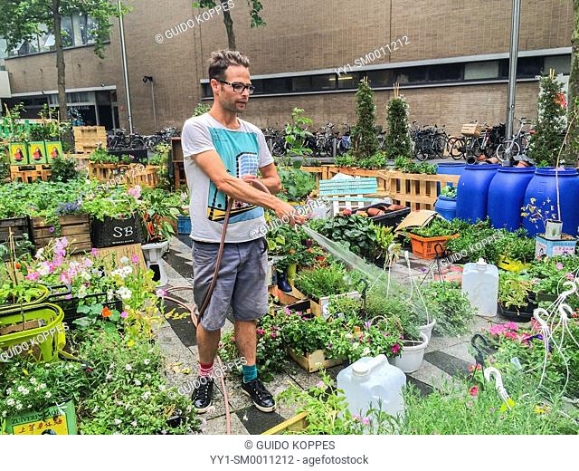 Tilburg, Netherlands. Bram is an Urban Gardener, maintaining his urban kitchen garden down town Tilburg