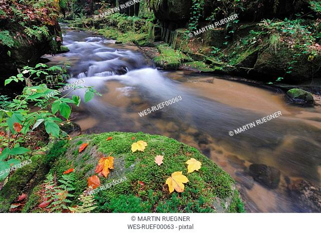 Germany, Bavaria, Brook Kirnitzsch