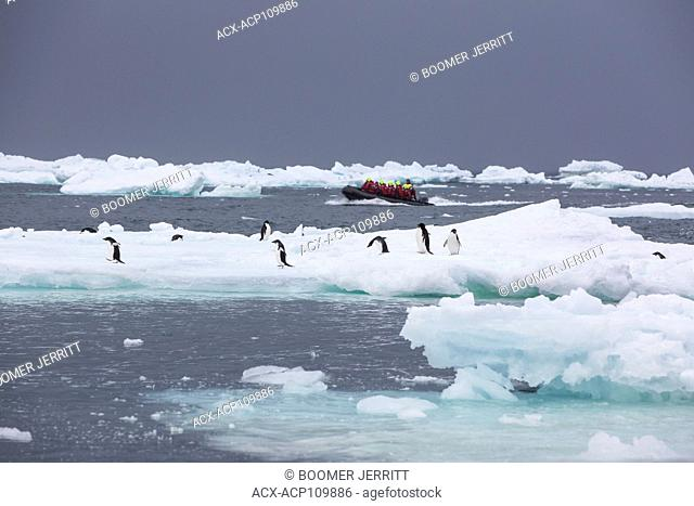 A Zodiak filled with adventure tourists powers through bergy bits and Adelie Penguins off of Brown Bluff, Antarctic Peninsula