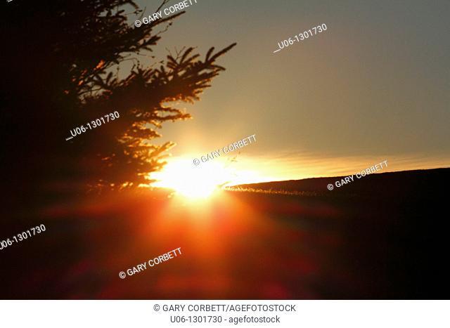 a sunburst through a cloud over a hill and beside a tree