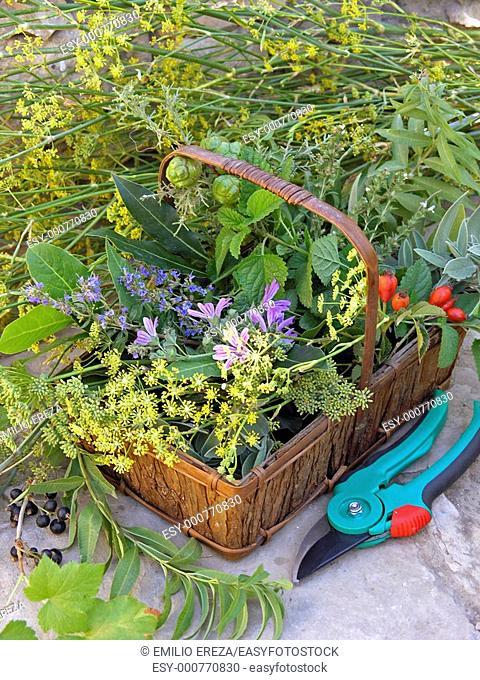 Medicinal plants in a basket