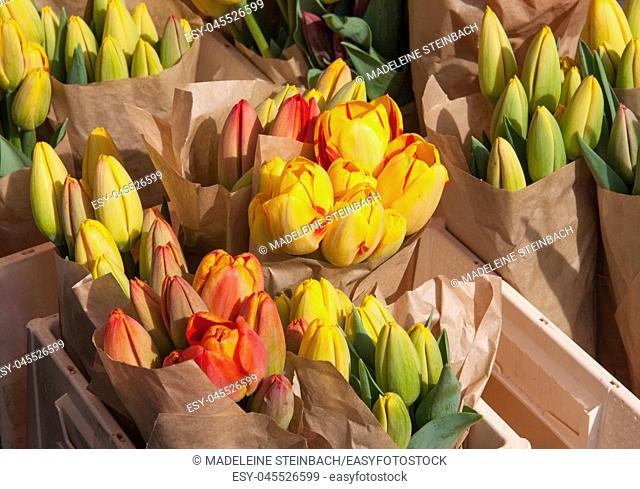 Yellow and orange tulips on display at the farmers market in March